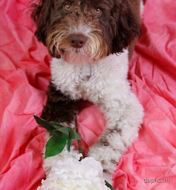 Sweet Labradoodle With White Peony by daphsam