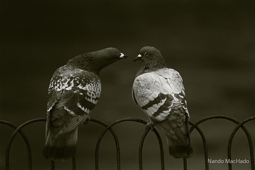 Lovebirds by Fernando Machado