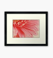 Pink Gerbera Flower Petals Abstract Macro Framed Print