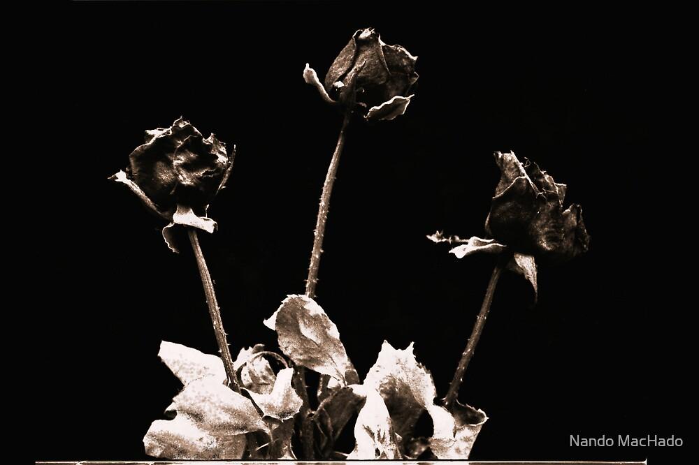 Dead Roses by Fernando Machado