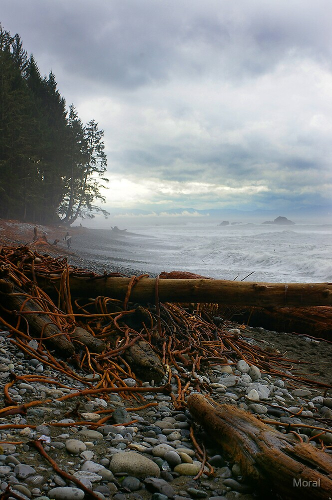 Driftwood and Bullkelp  by Ryan Watts