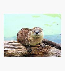 Happy Little Otter Photographic Print