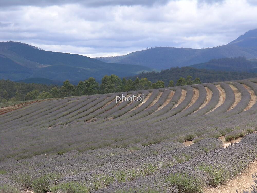 australia-tasmania north lavendale farm by photoj