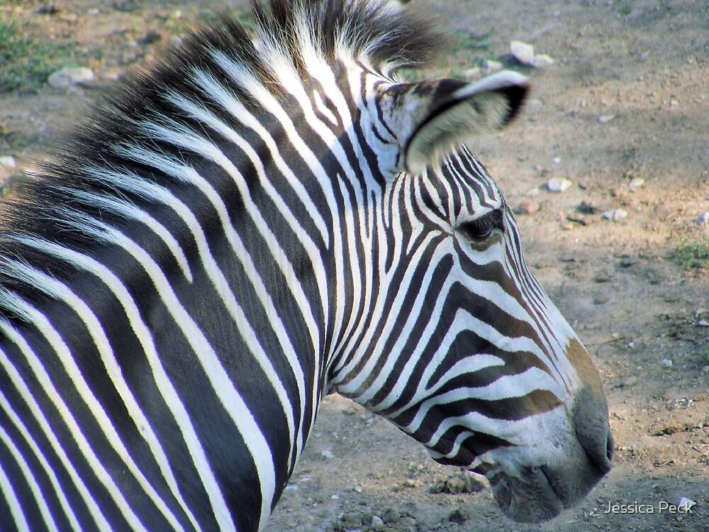 Zebra by Jessica Peck