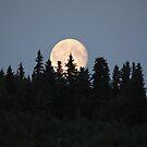 Full Moon in Fall by Beth M. Hughes