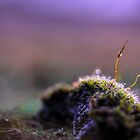 Moss Macro at Sunset by Astrid Ewing Photography
