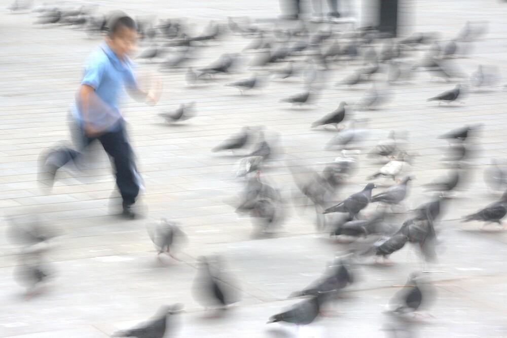Chasing Birds by Chris Putnam