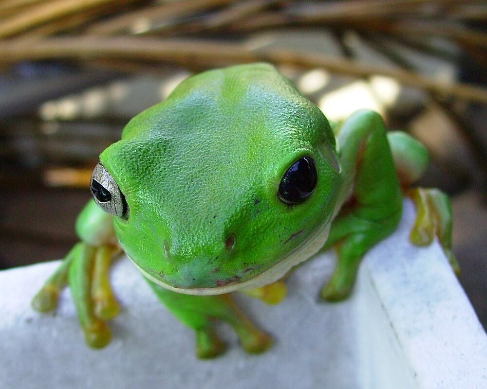 Green Tree  Frog by Leesa Habener