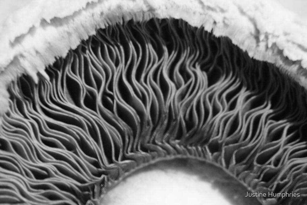 Mushroom by Justine Humphries