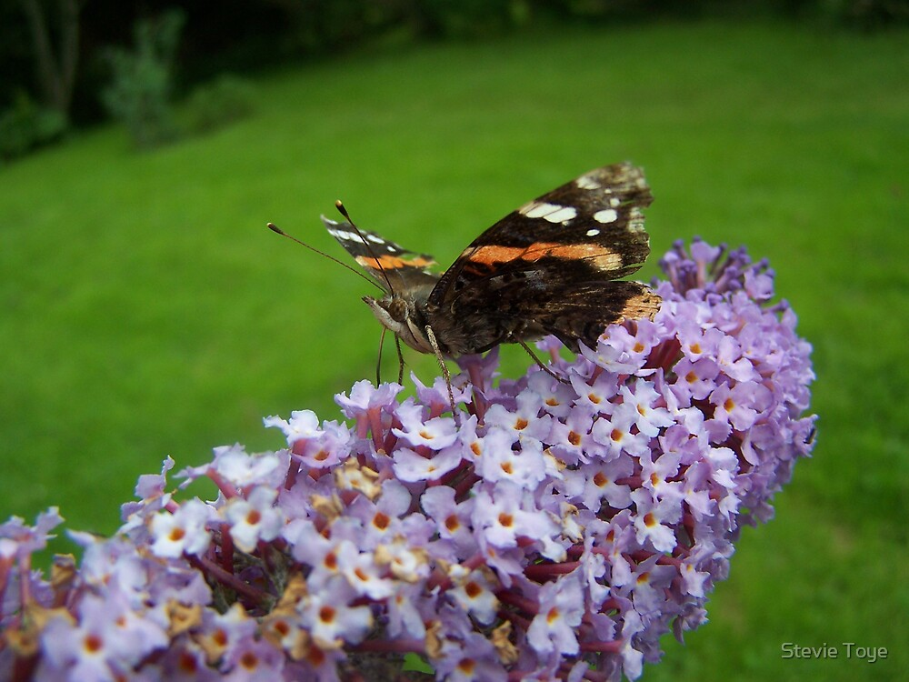 Butterfly at work again... by Stevie Toye