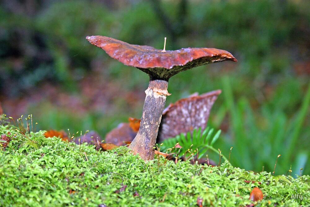 Wild Mushroom by Alfy