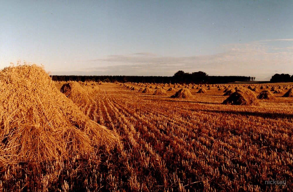 Sun on the Stubble by nicksay