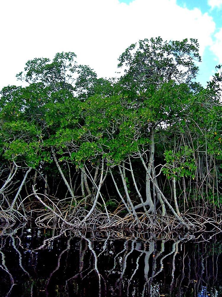 Mangroves by Erika Benoit