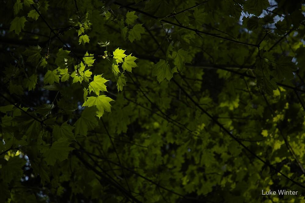 Spring Leaves by Luke Winter