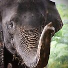 Elephant portrait 2 by fab2can