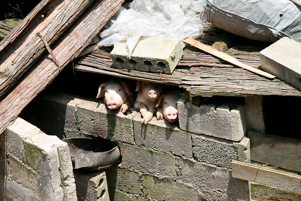 Three LIttle Pigs by johnnydaniell