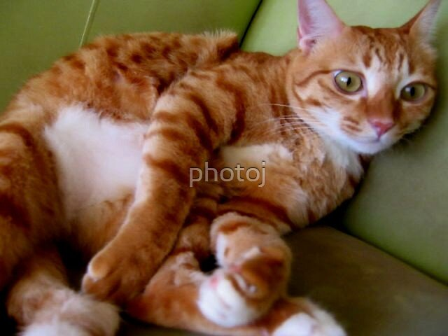photoj  couch potatoe, a lazy day after a hard day mice hunting by photoj