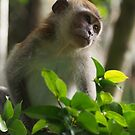 Monkey portrait 1 by fab2can