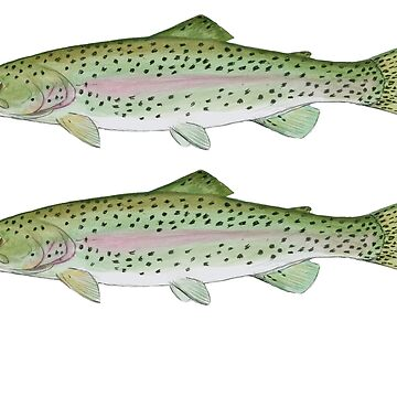 Double rainbow trout  by CarsonSloas