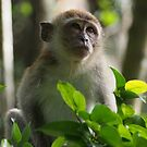 Monkey portrait 2 by fab2can