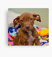 Pit Bull Mix Puppy  Canvas Print