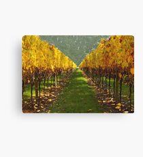 'Autumn vineyard' Canvas Print