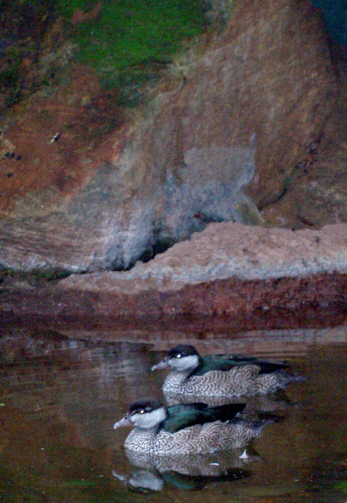two ducks by Carolyn