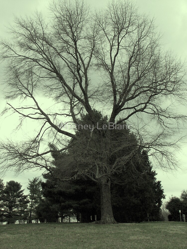 tree in a comming storm by Whitney LeBlanc