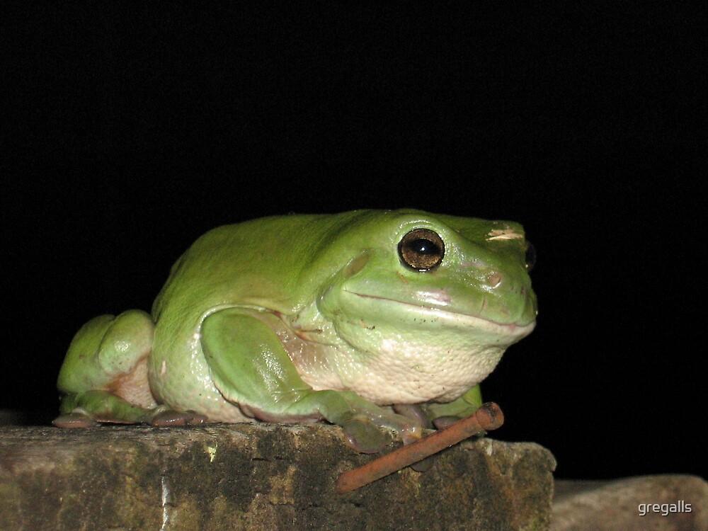 Big Frog by gregalls