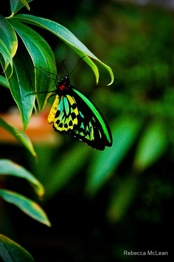 Pretty in Green by Rebecca McLean