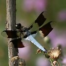 Spreading my wings by spig