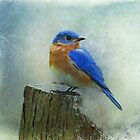 Bluebird by Sandy Keeton