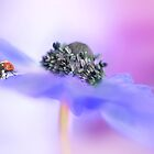 Anemone lady by Lyn Evans