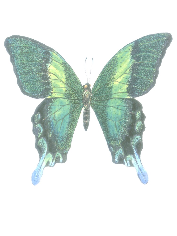 Swallowtail Butterfly by kurtmarcelle