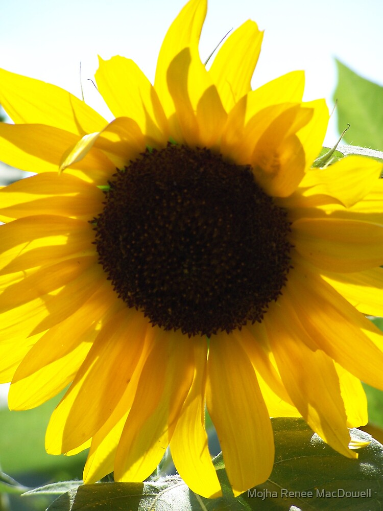 Sunflower I by Mojha Renee MacDowell