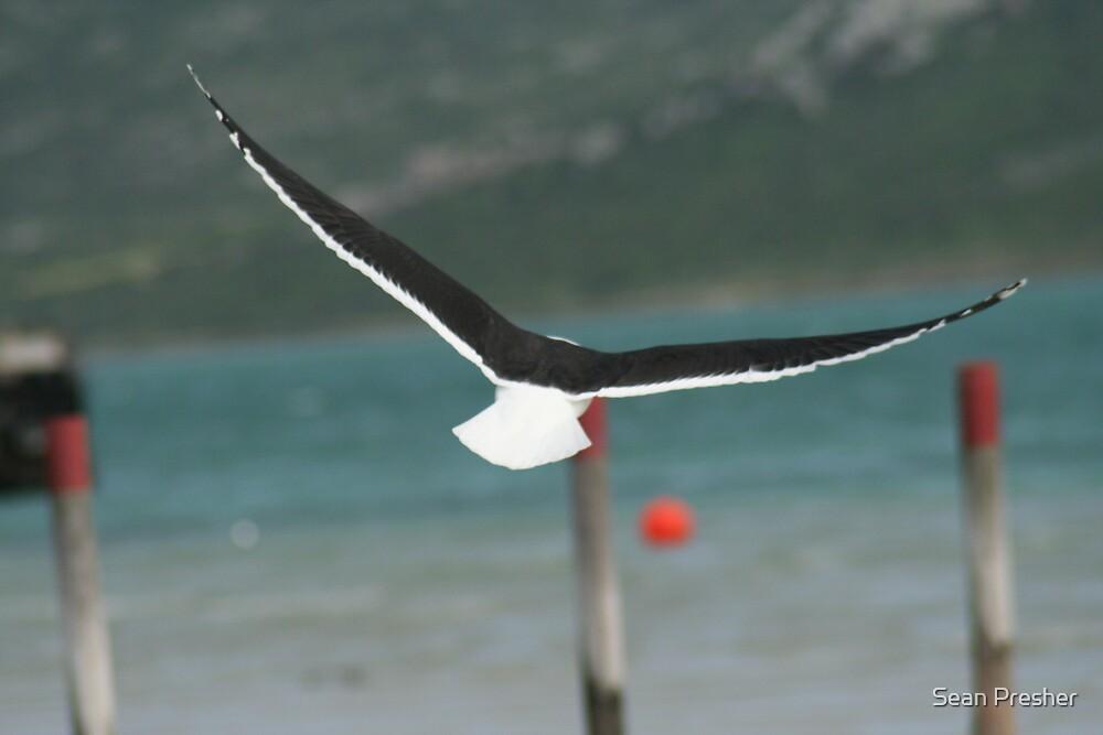 Seagull_In_Langebaan by Sean Presher