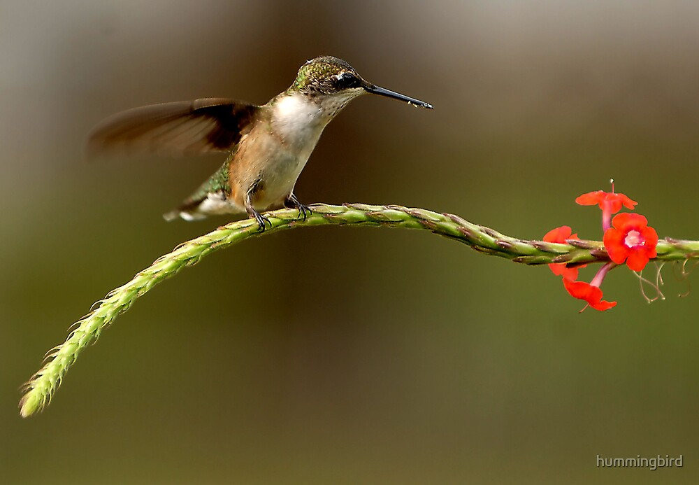 Waiting In Line by hummingbird