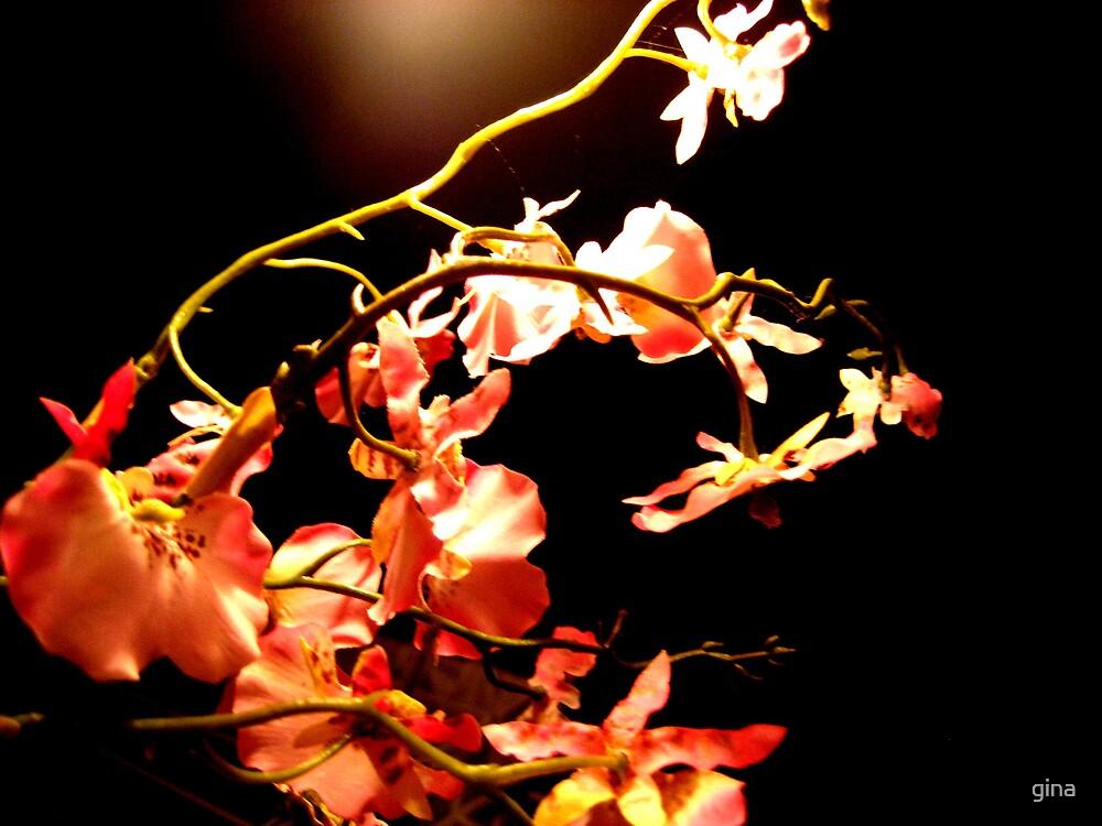 Flower lighting by gina
