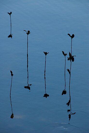 Reflections by Craig Goldsmith