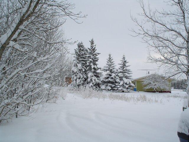 winter in rural Alberta by Patricia McKinnon