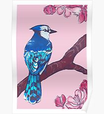 jay in spring Poster