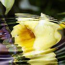 Floating Allamanda by Lesley Smitheringale
