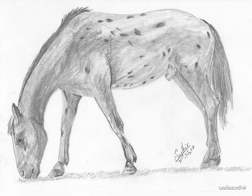 Pencil sketch Horse by waliasudhir