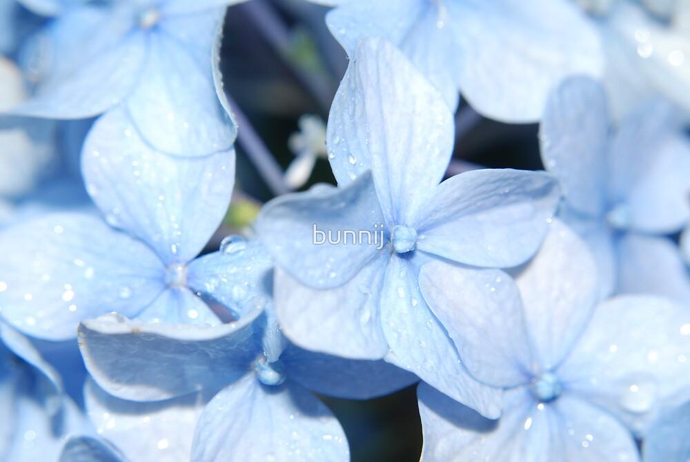 Light Blue Hydrangea by bunnij