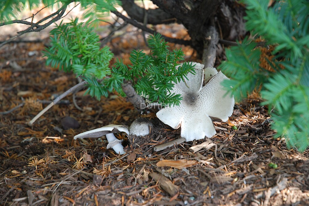 Mushroom Petals by bunnij