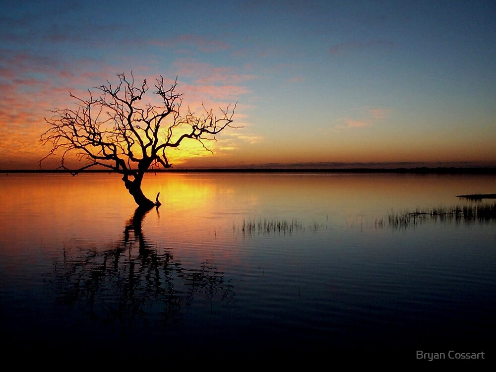 Coongie tree by Bryan Cossart