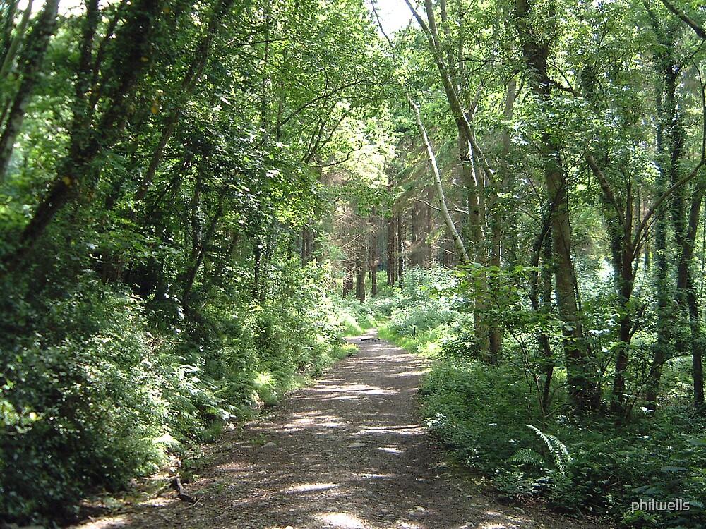 Woodland walk by philwells