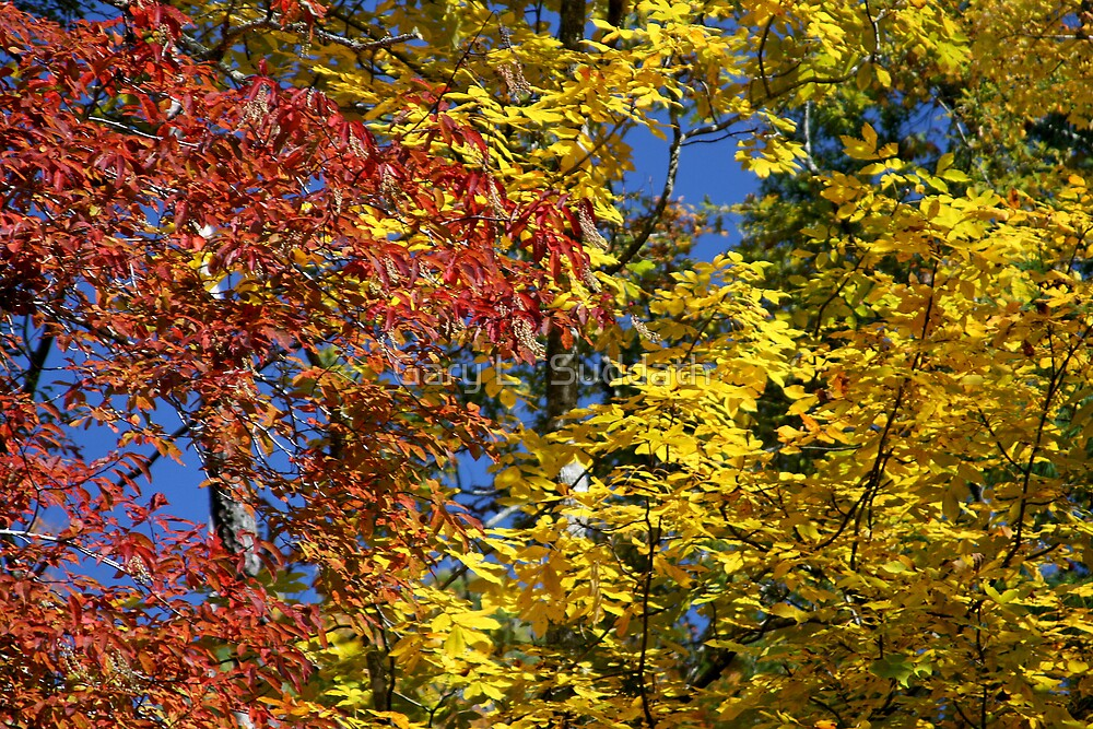 Fall Foliage by Gary L   Suddath