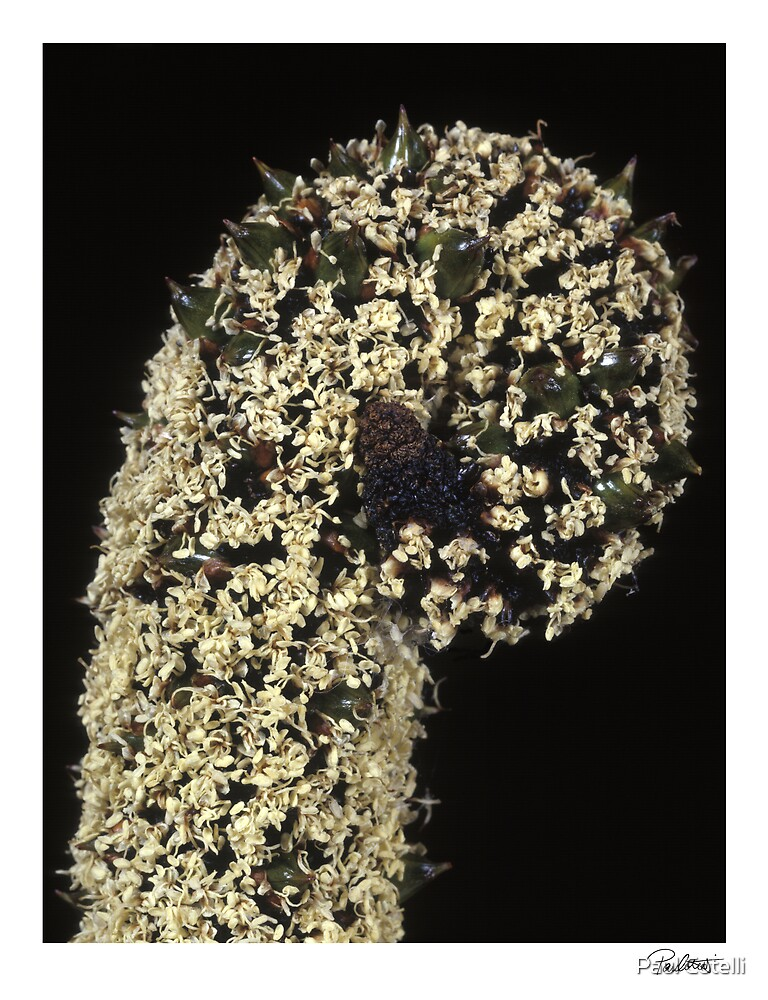 """'Grass Tree' from the series """"Inner Bloom"""" by Paul Cotelli"""