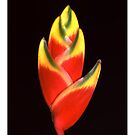"""'Heliconia Rostrata' from the series """"Inner Bloom"""" by Paul Cotelli"""